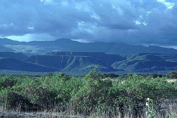 thicket vegetation tanzania